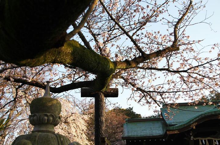 日枝神社-243