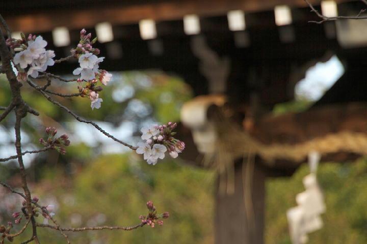 日枝神社-322