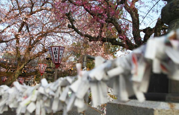 日枝神社-312