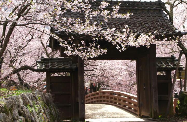 高遠の桜-801