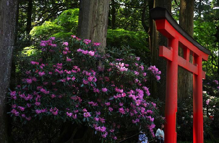 箱根神社-140