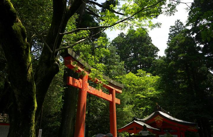 箱根神社-103