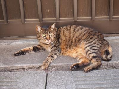 猫(武蔵小山)
