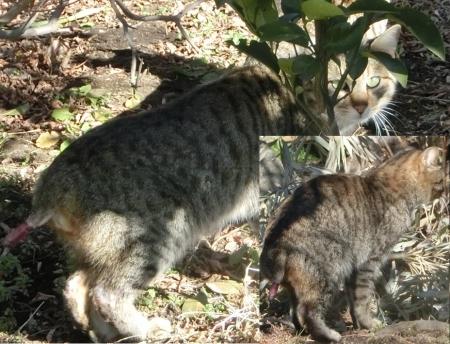 0220TNR負傷猫