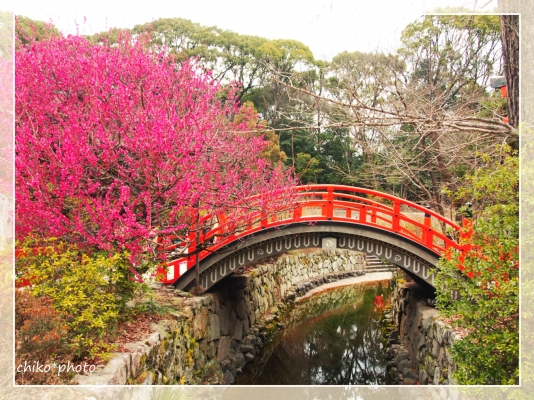 photo-613 輪橋と梅の木
