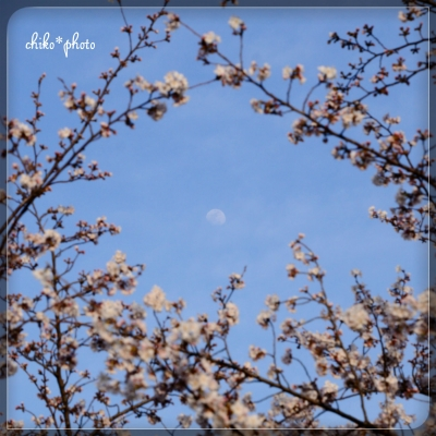 photo-621 桜と月1