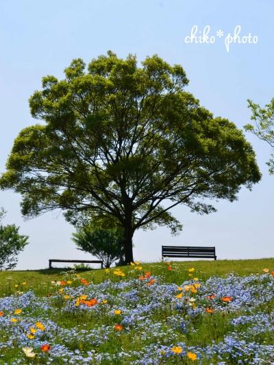 photo-654 花の丘