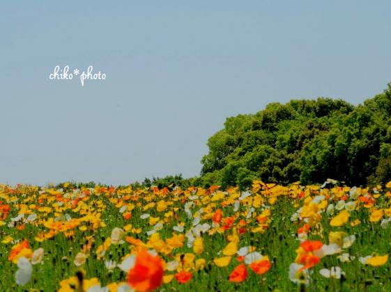 photo-654 花の丘 _2