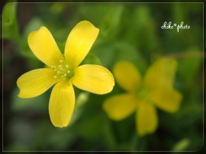 photo-659 春~初夏の草花 3_2