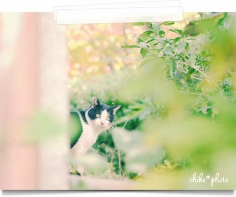 photo-603_1_1.jpg