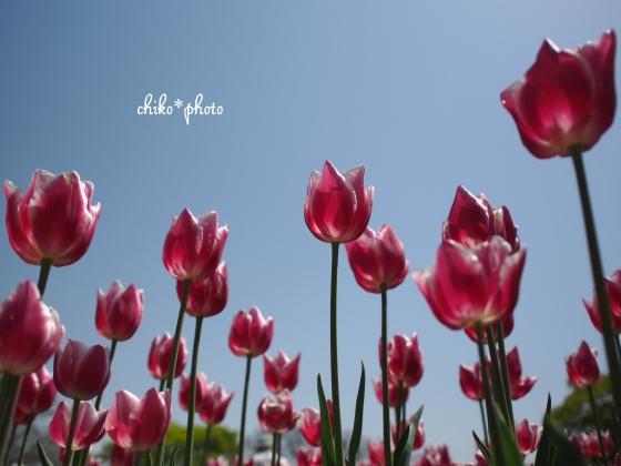 photo-639.jpg