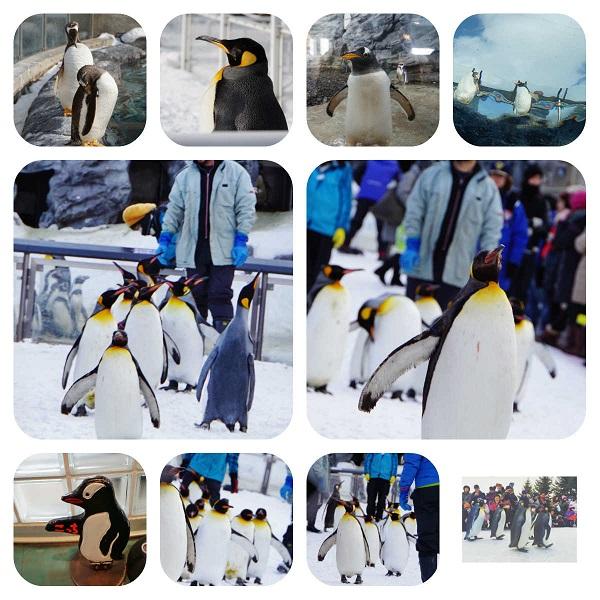 ペンギン散歩s