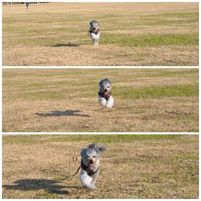 lulu走る