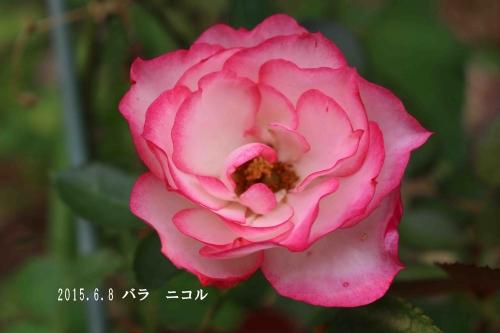 2015 06 08_0204_edited-1