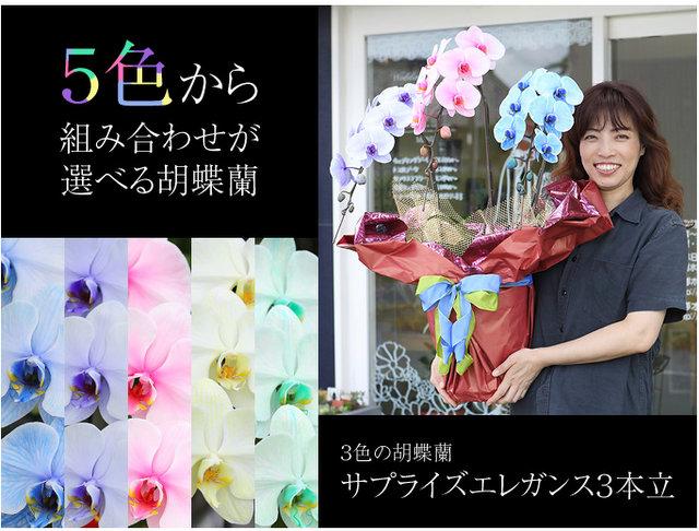 カラフル 胡蝶蘭 珍しい 花
