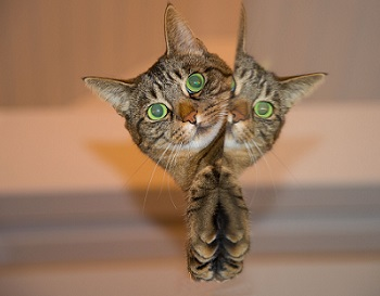 cat-697113_1280.jpg