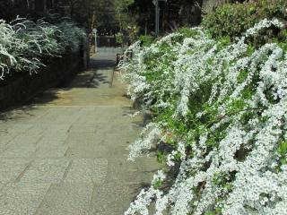 yukiyanagi1.jpg