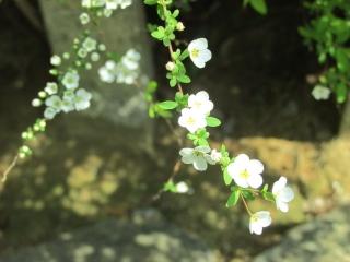 yukiyanagi2.jpg