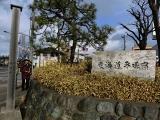2015年1月平塚宿スキル16
