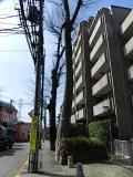 甲州街道2015年2月71