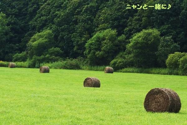 牧草0816