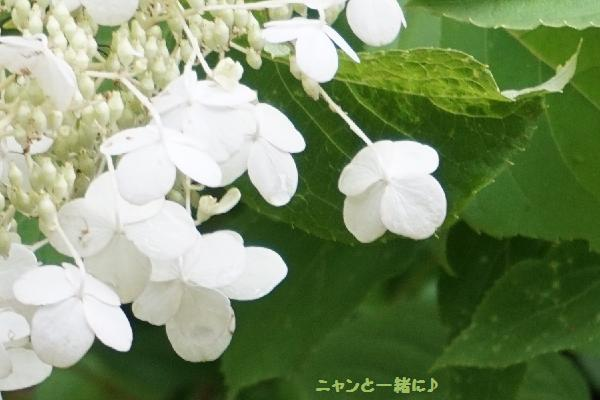 白い花815