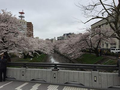 2015松川桜2