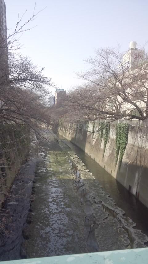 神田川 004