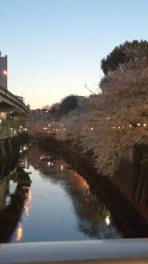 神田川桜並木 003
