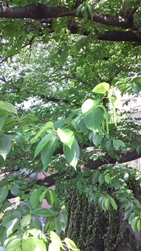 緑神田川 004