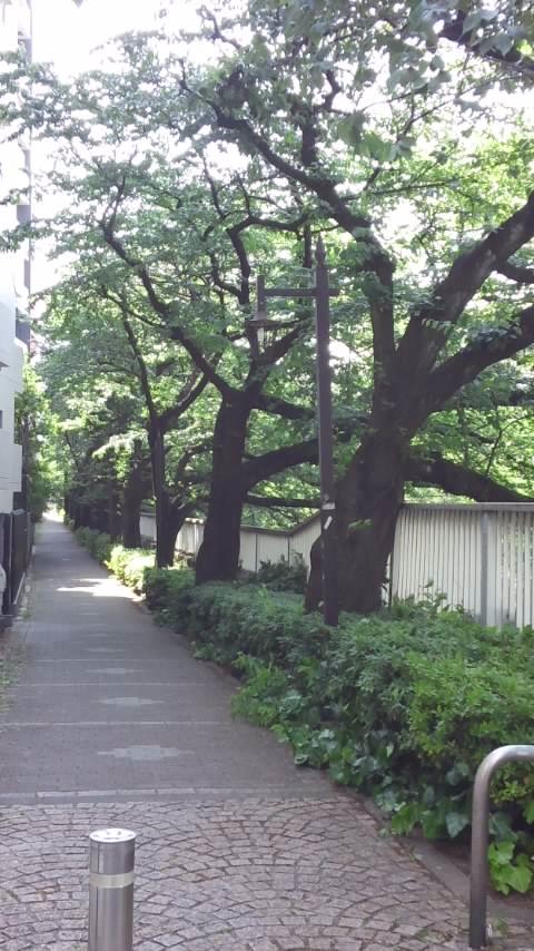 緑神田川 006