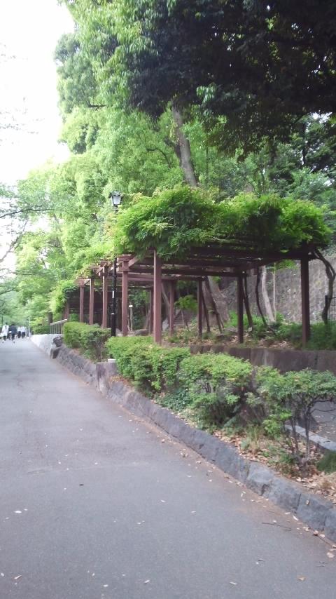 緑神田川 014