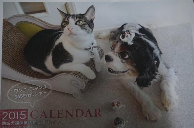 地域犬猫保護活動支援カレンダー2015