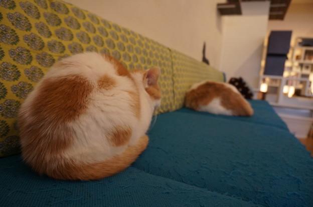 ソファーで眠るお尻