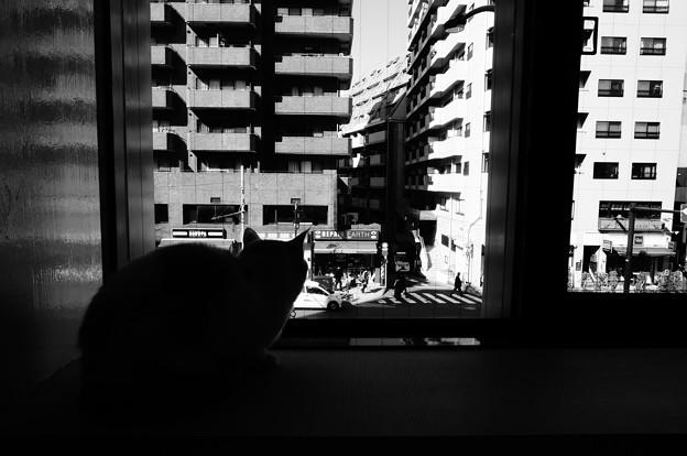 窓辺でたたずむ、の図