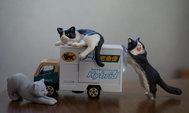 車を占領する猫達