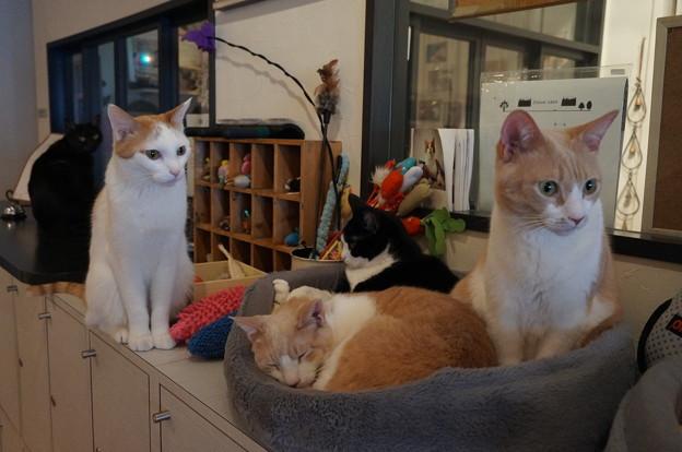 猫スタッフ達のホッとステーション