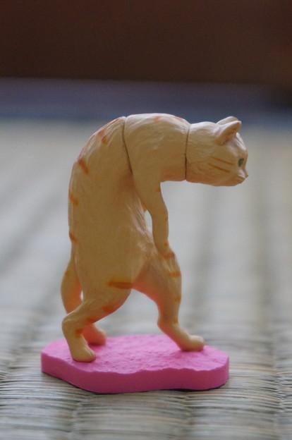 見事な猫背