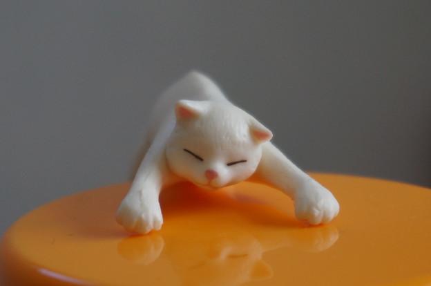 脱力猫~白ちゃん~