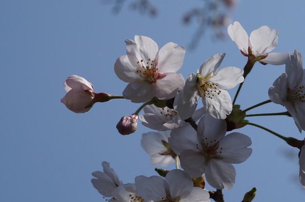 開花グループ