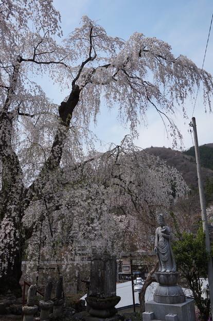 お地蔵さんと枝垂桜