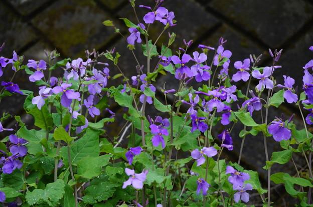 野に咲く花その1