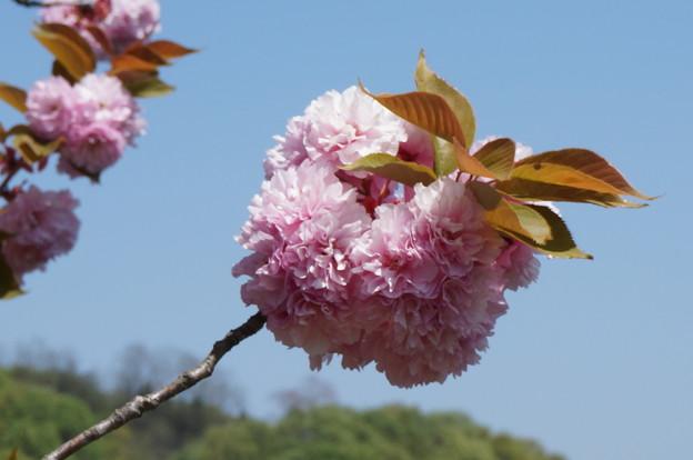ティッシュで作ったお花みたい(*´艸`*)
