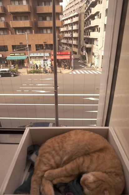 窓際の箱に入って寝る、の図