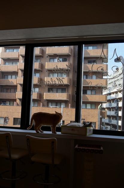 恵比寿の窓際族その1
