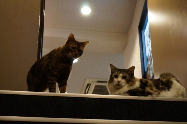 階段で待機するニャンズ