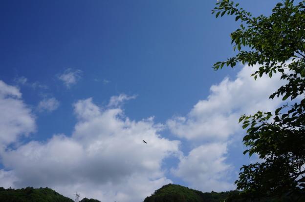 空に舞うとんび