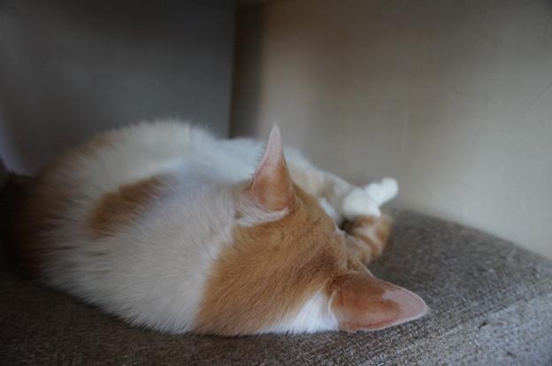椅子の上で熟睡中ZZZ