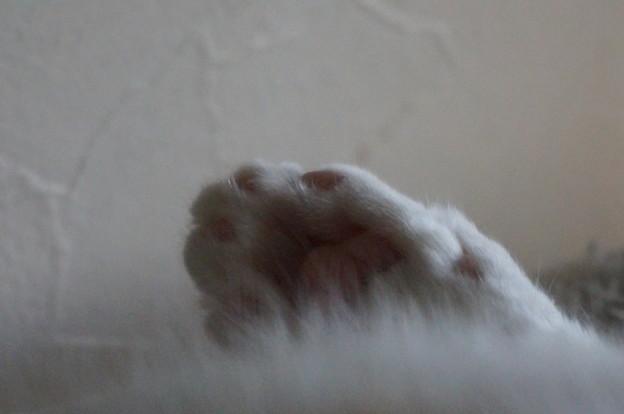 熟睡中のニクキウ