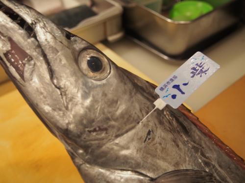小柴産太刀魚2